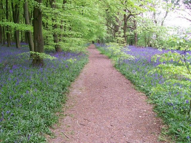 Path through wood at Mop End