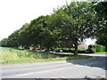 TR3552 : Trees along Sholden New Road by Oast House Archive