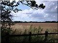 SP2874 : A view from Hollis Lane towards Red Lane, Burton Green by John Brightley