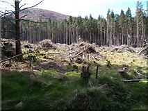 J3629 : Clear fell section of the Donard Forest by Eric Jones