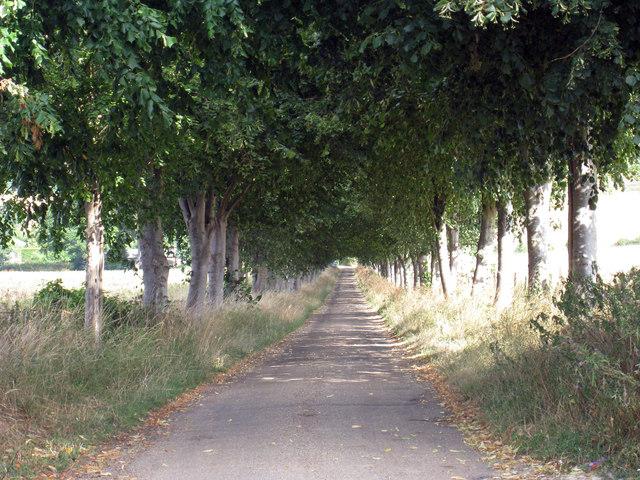 Tree Line Drive to Shootfield