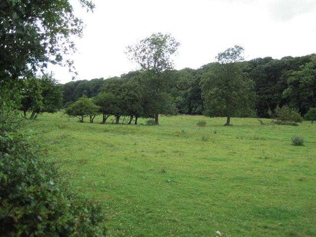 Bumpy field