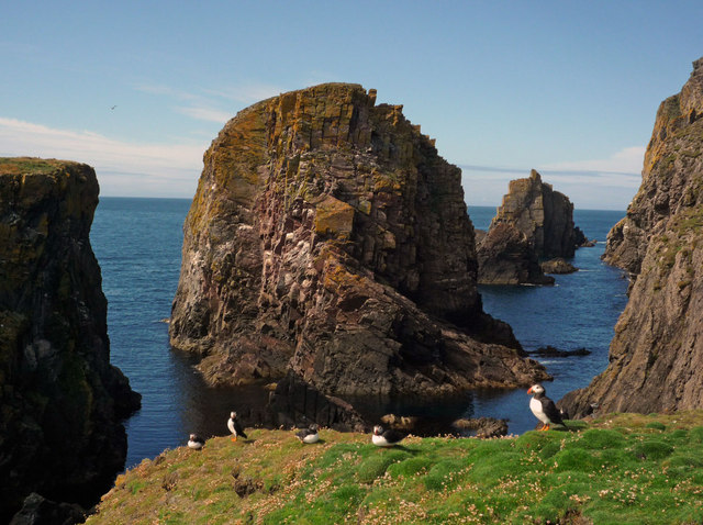 Puffins on the cliffs by The Holms