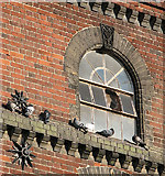 TG2407 : Pigeons at home by Evelyn Simak