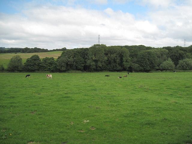 Farmland near Alvanley