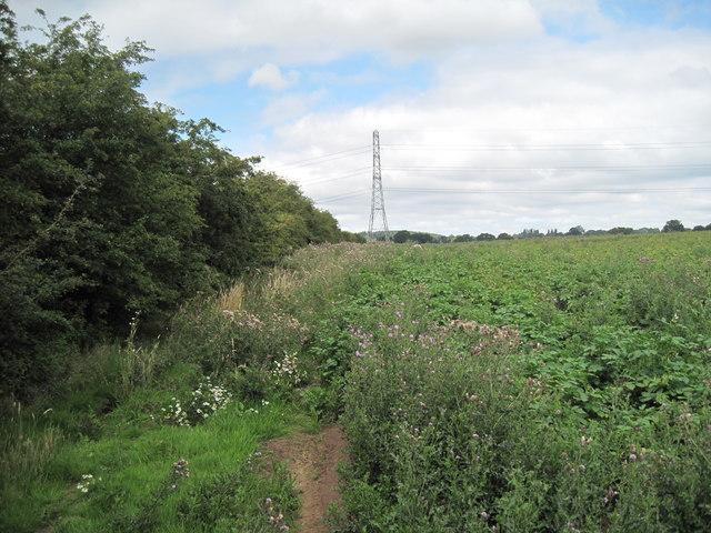 Footpath towards Alvanley