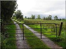 H5172 : Lane, Cloghfin by Kenneth  Allen