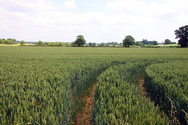 Arable field on Deddington Hill