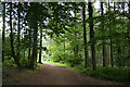 SX5459 : Sparkwell: in Cann Wood by Martin Bodman