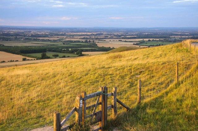 Chalk downland on Whitehorse Hill