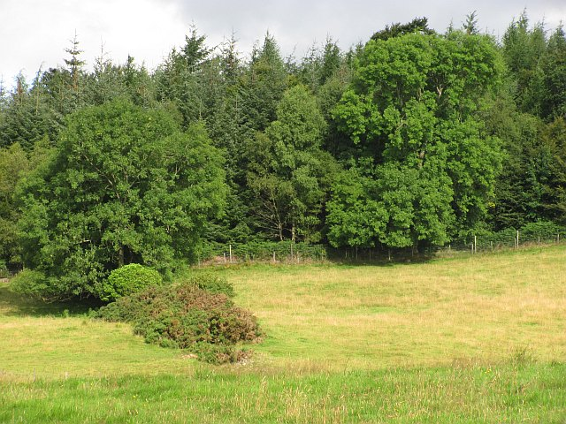 Edge of forestry, Gartmore