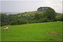 SE7296 : Hill Plantation by Mick Garratt