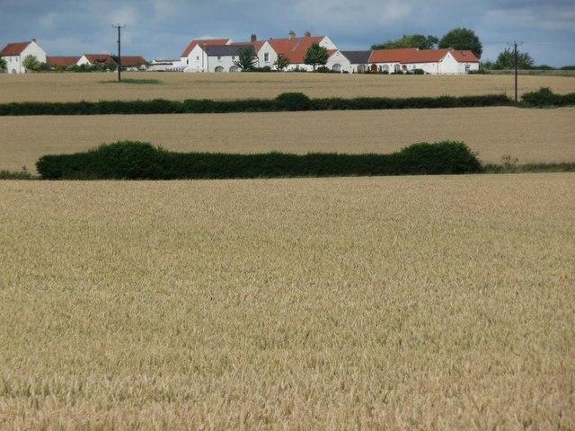 Wheat fields off Dere Street