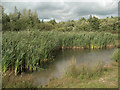 SS8783 : Reeds, trees and water at Parc Slip Nature Park by eswales
