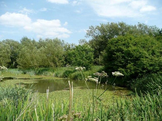Pool in Marsh Lane Nature Reserve