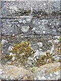 SX7087 : Bench Mark, St Michael's Church, Chagford by Maigheach-gheal