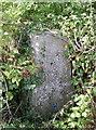ST7064 : Pillar with a garden by Neil Owen