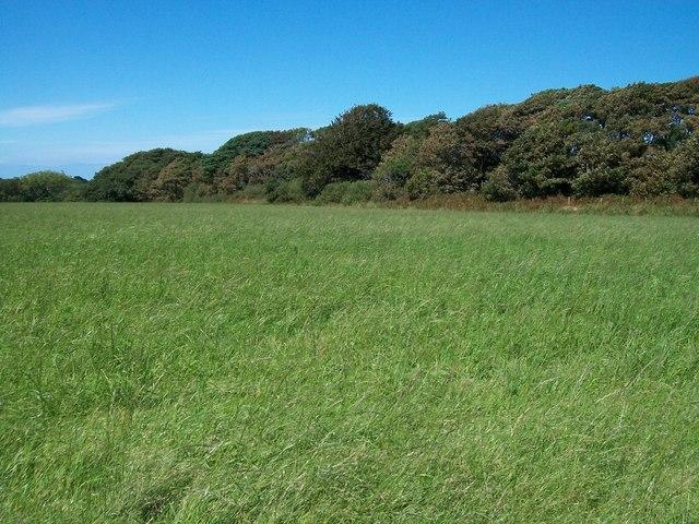 Coed Pwllgwd plantation at Cefn-amwlch House