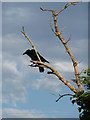 TQ3567 : Crow, South Norwood Country Park by Stephen Richards