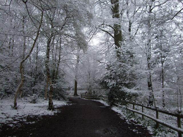Black Park in the snow