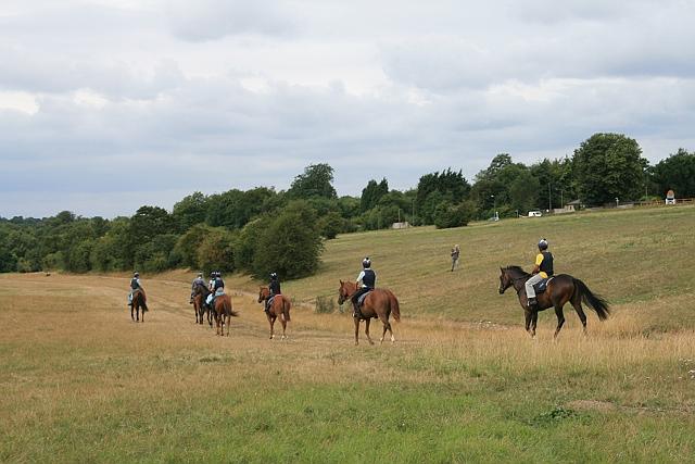 Epsom Downs: horses in training