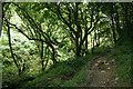 SX0789 : Tintagel: near Trewethet Mill by Martin Bodman