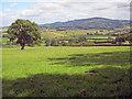 SO3419 : Farmland near Pen-y-parc by Trevor Rickard