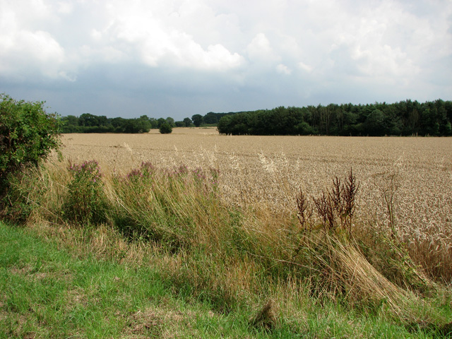 Fields south of Ketteringham Road