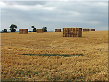 TA0114 : After the Harvest near Worlaby by David Wright
