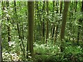 SO6767 : Woodland, Teme Valley by Richard Webb