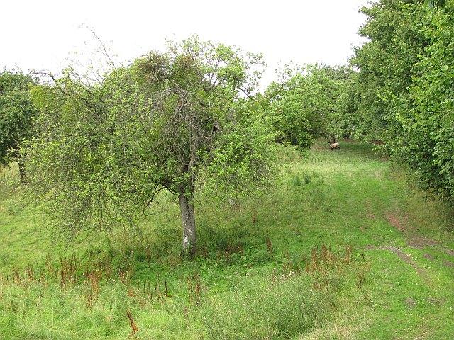 Orchard, Rochford