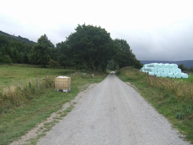 Forestry Road at Bank Foot