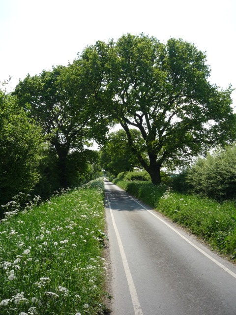 Looking along Langwith Stray