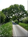 SE6548 : Looking along Langwith Stray by DS Pugh