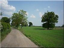 SE6548 : Elvington bound bridleway by DS Pugh