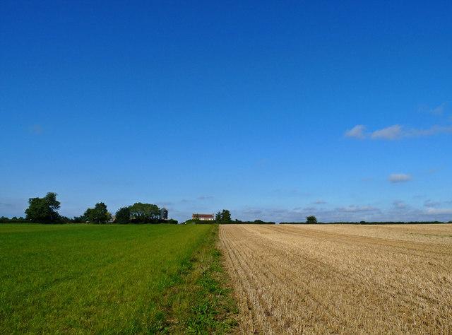 Footpath between the fields