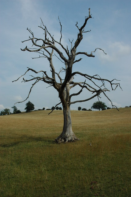 N Boating Pond - Dead Tree and Regeneration | Ancient Tree