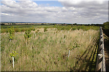SK7528 : New copse between Mount Pleasant and Harby Hills by Kate Jewell