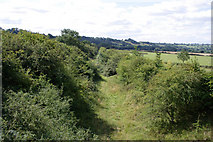 SK7528 : Old railway cutting at the foot of Harby Hills by Kate Jewell
