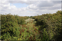SK7528 : Filled in railway cutting by Kate Jewell