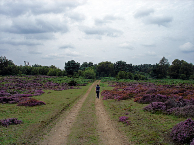 Byway to Bussock Woods