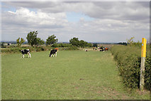 SK7528 : Bridleway in the Vale of Belvoir by Kate Jewell