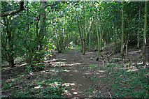 SK7628 : Footpath through the woods by Kate Jewell