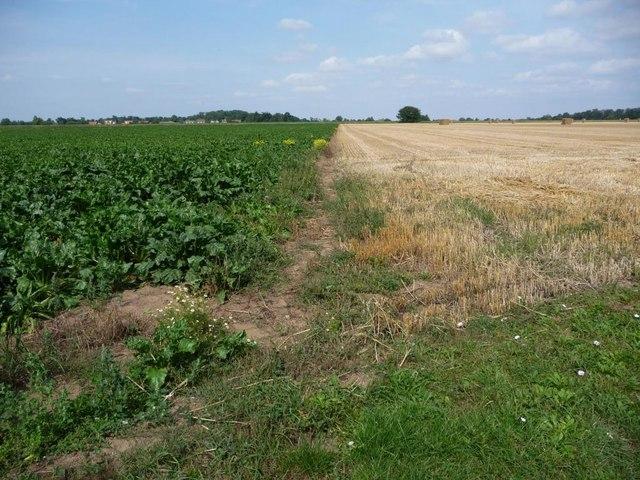 Field boundary near Reedness