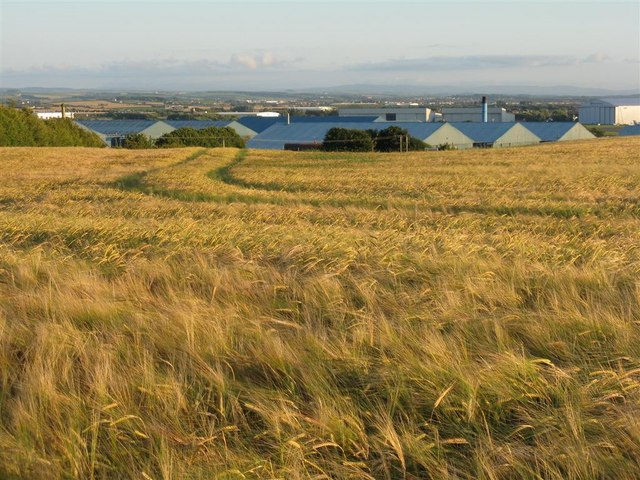 Barley field at Monkton