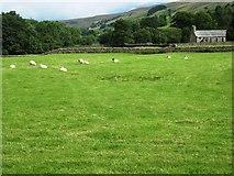 NY7801 : Pasture land near Shoregill by Philip Barker