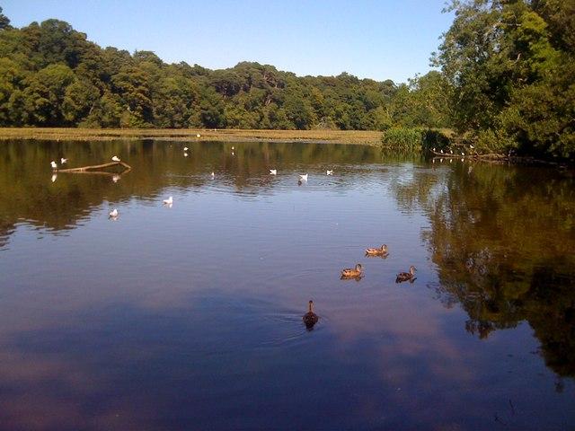 Swan Pond at Culzean Castle Country Park