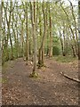 TM2089 : Footpath round the west edge of Tyrrel's Wood by Linden Parker