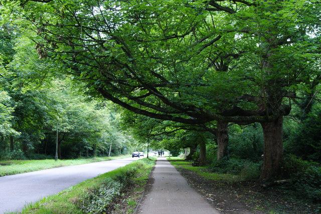 Trees on Ham Gate Avenue