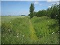TF4701 : Ditch near Far End by Hugh Venables